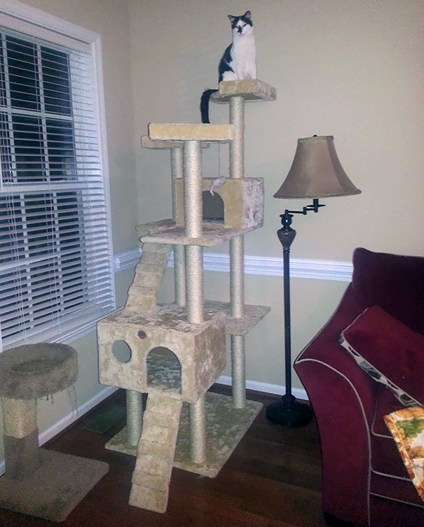 "My Wife Was Angry At Me For Buying Such A Huge Cat Tree For Our Blind Cat. ""She"