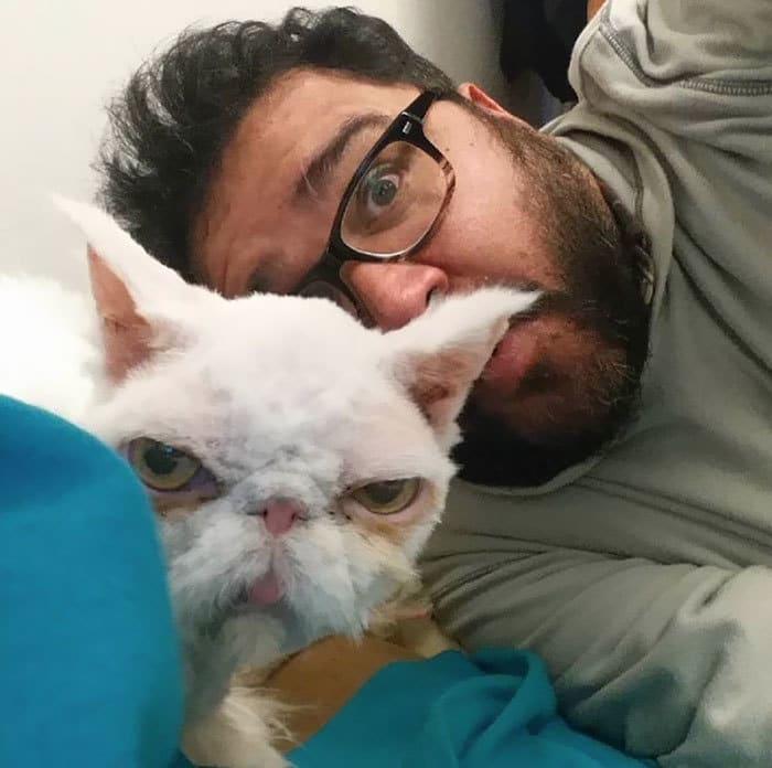 persian-cat-5-pound-fur-carpet-sinbad-2