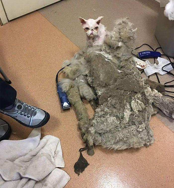 persian-cat-5-pound-fur-carpet-sinbad-9