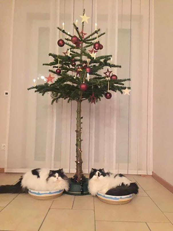 Christmas Are Protected