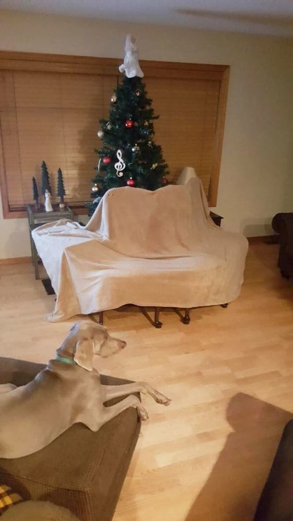 So My Dad Told Me He Had To Dog Proof The Christmas Tree... This Was Not What I Expected