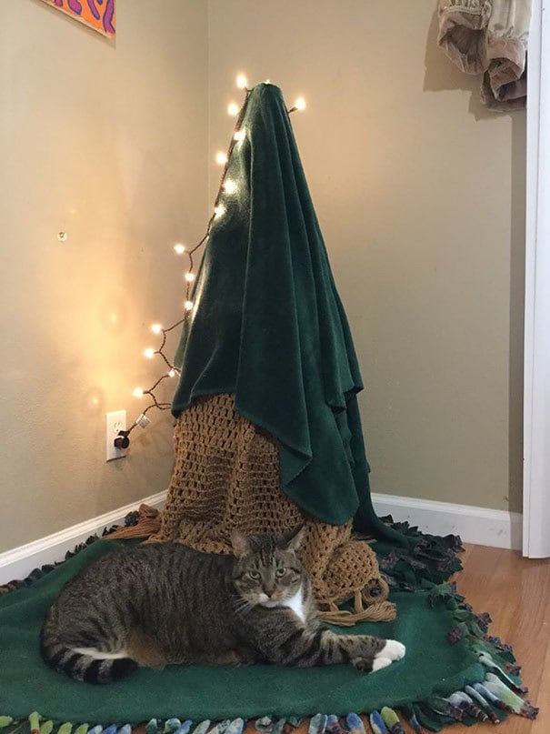 Our Cat Proof And Environmentally Conscious Christmas Tree. Turn A Tomato Cage Upside Down, Add A Blanket, And Laugh At The Situation