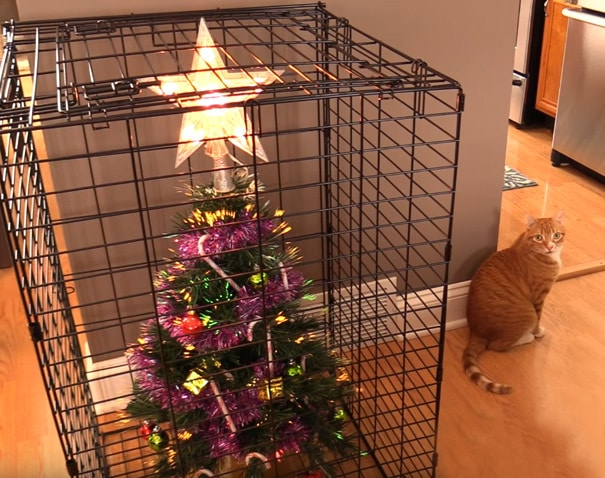 How To Protect Christmas Tree From Your Cat? Use A Cage. For The Tree