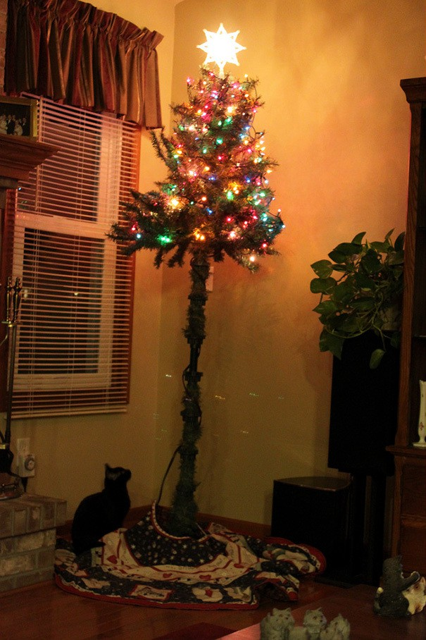 Our Christmas Tree Thanks To The Worlds Highest Jumping Kitten