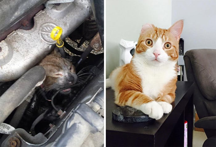 Mr. Biscuits Tried To Get Warm In A Car Engine And Was Burned Badly When The Car Drove Away. Now He