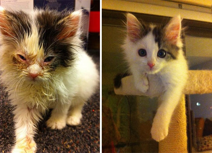 Shelter Found A Box Of Kittens With Only One Living But Blind Survivor. 6 Months Later, She Is Healthier Than Ever