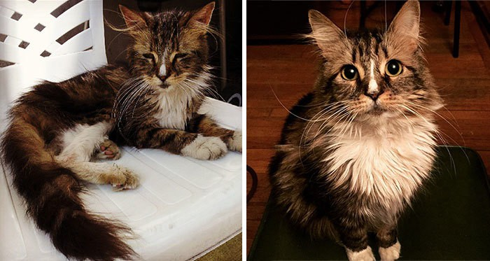 Scout, A Thin, Stray Cat, A Year Later