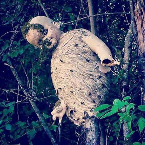 Осы строят гнездо вокруг отброшенной детской куклы