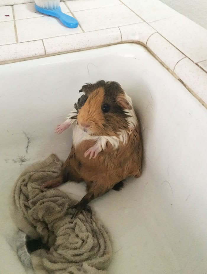 Not Sure What To Think About Bath Time