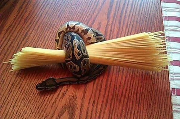 Используйте змею, чтобы держать пасту легко