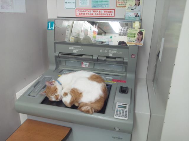 ATMの上で眠る猫
