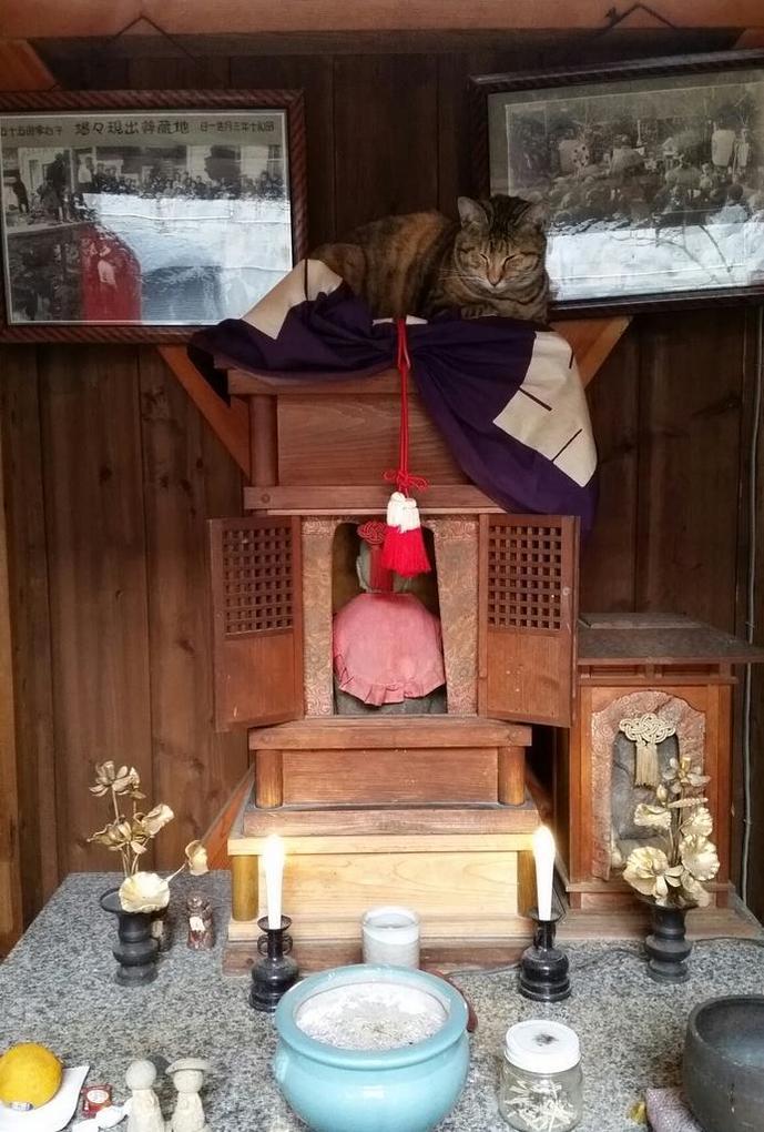 お地蔵さんの上で眠る猫