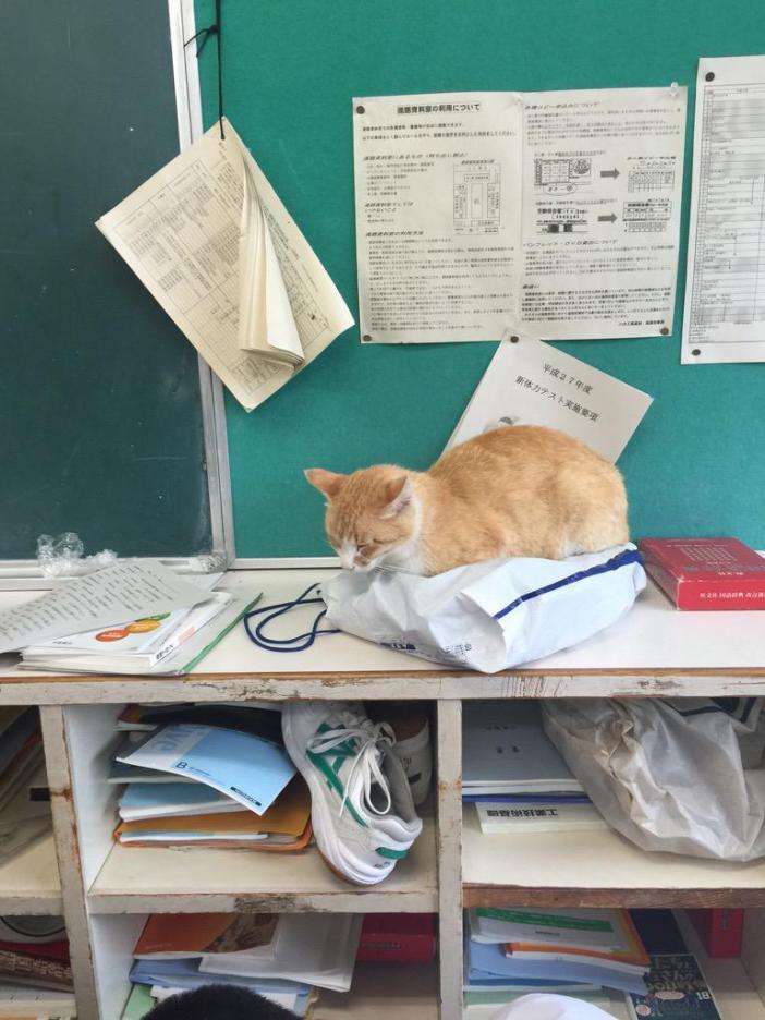 教室でくつろぐ猫