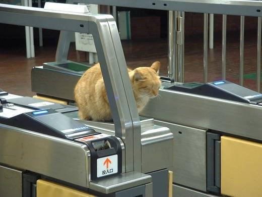 改札で眠る猫