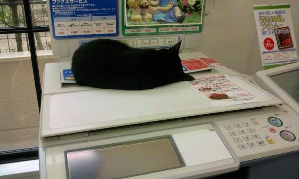 コピー機の上に猫