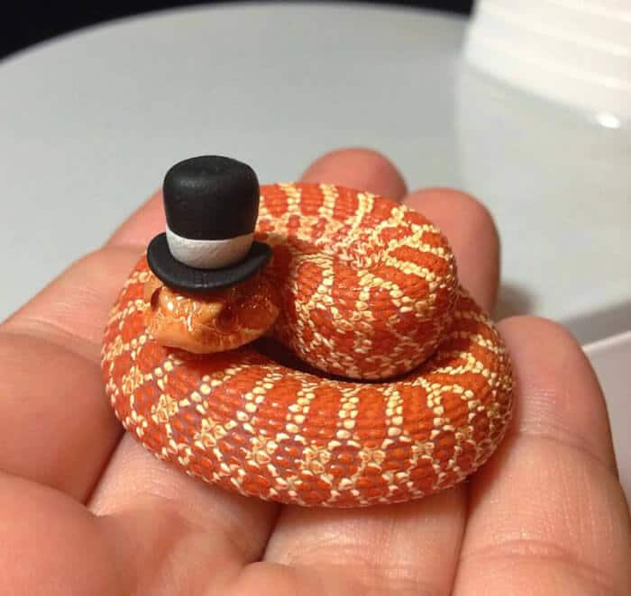 snakes with hats 1 (1)