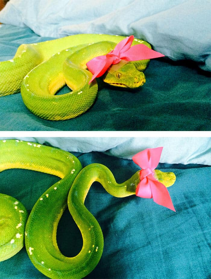 snakes in hats 13 (1)