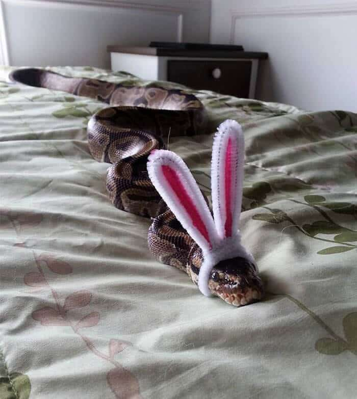 snakes in hats 3 (1)