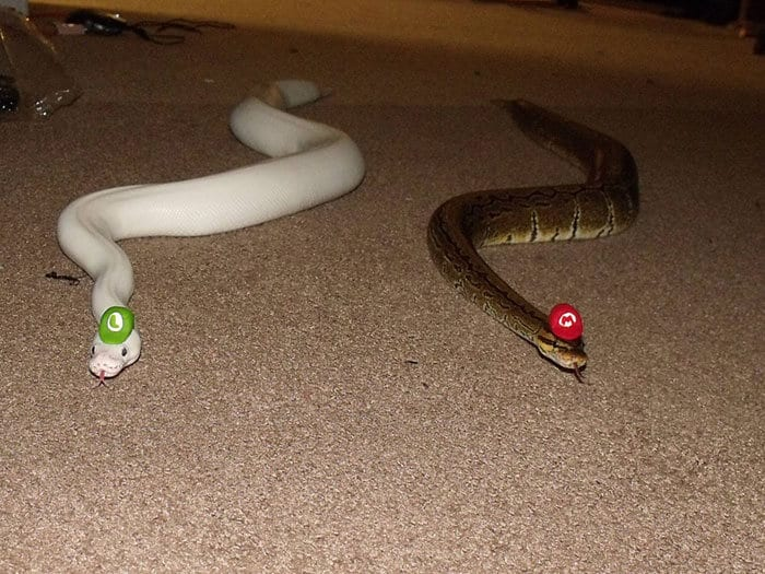snakes in hats 9 (1)