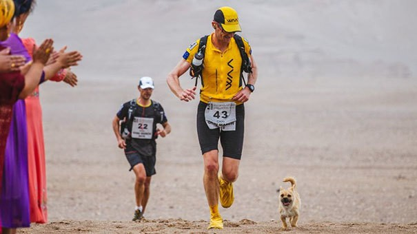 stray-dog-joins-race-gobi-dion-leonard-china-11