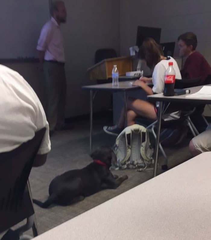 student-professor-dog-hurricane-irma-10