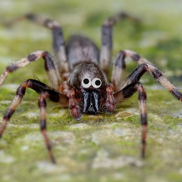 This scary looking spider? Not so scary with googly eyes.
