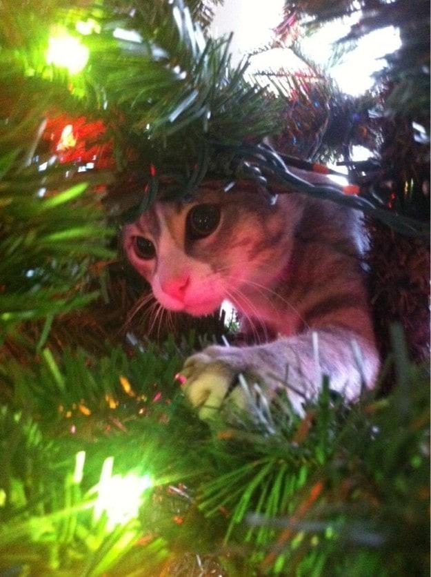 """""""I will catch these bright, shiny tree mice."""""""