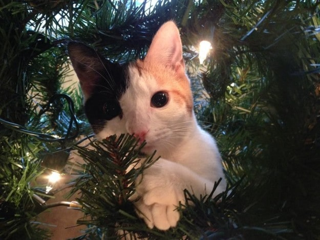 """You have to admit that this tree really makes my fur glisten."""