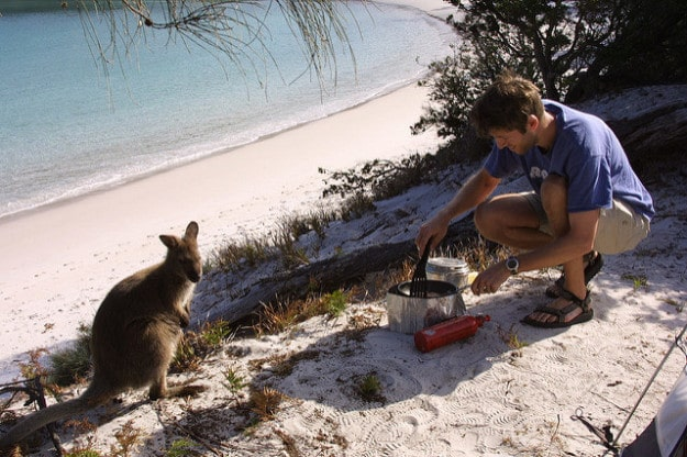 Wallabies at Wineglass Bay, Tasmania