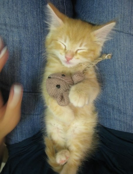 This wee kitten who needed a nap after an exciting game of cat-and-mouse.