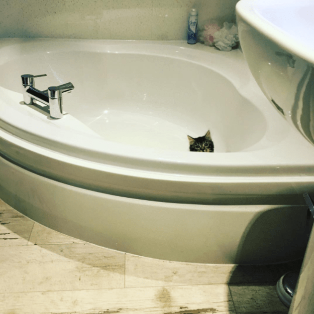 This adorable kitten who is maybe a little lost.