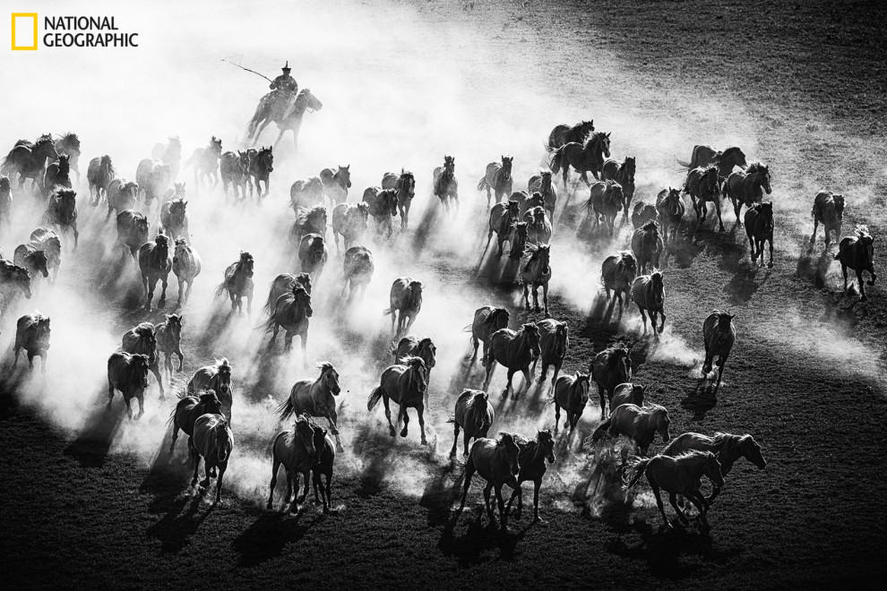Majestic horses running in China.
