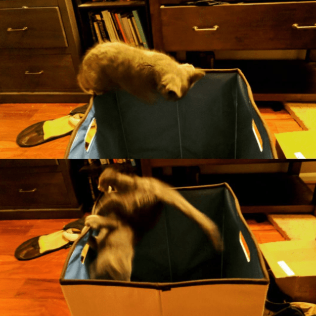 This kitten who learned the hard way.
