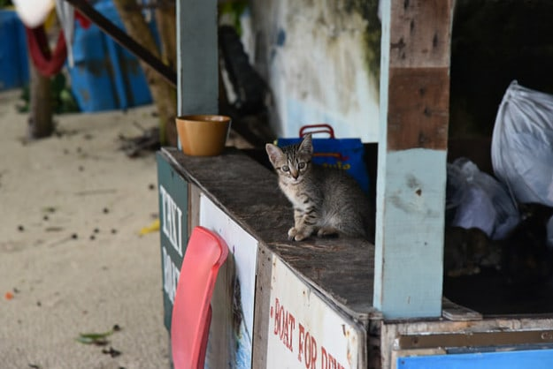 Cats on Koh Phi Phi, Thailand