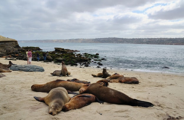 Seals and Sea Lions at La Jolla Cove, California