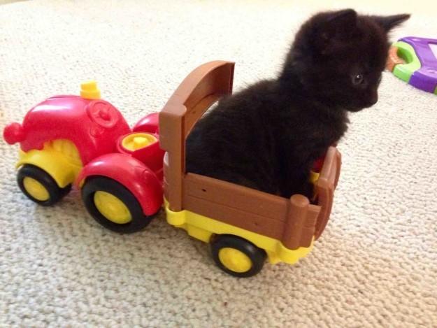 This teeny-tiny kitten who