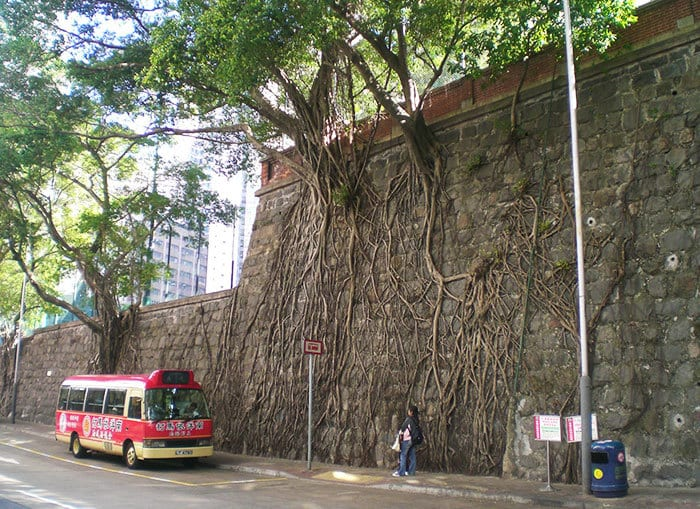 HK Forbes Street Kennedy Town Stone Wall Trees