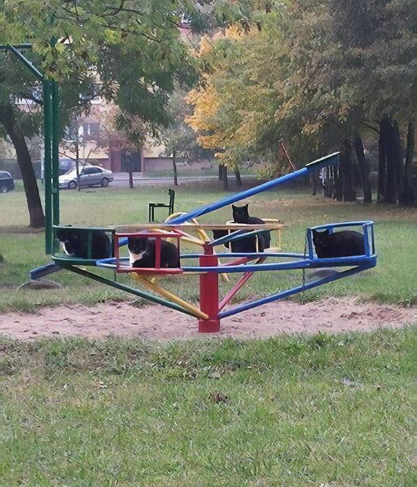Я прохожу через парк, и я вдруг увидел это