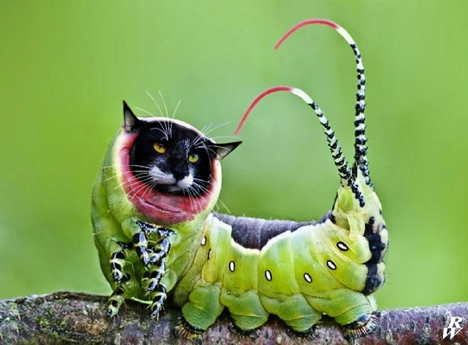 A real Cat-erpillar
