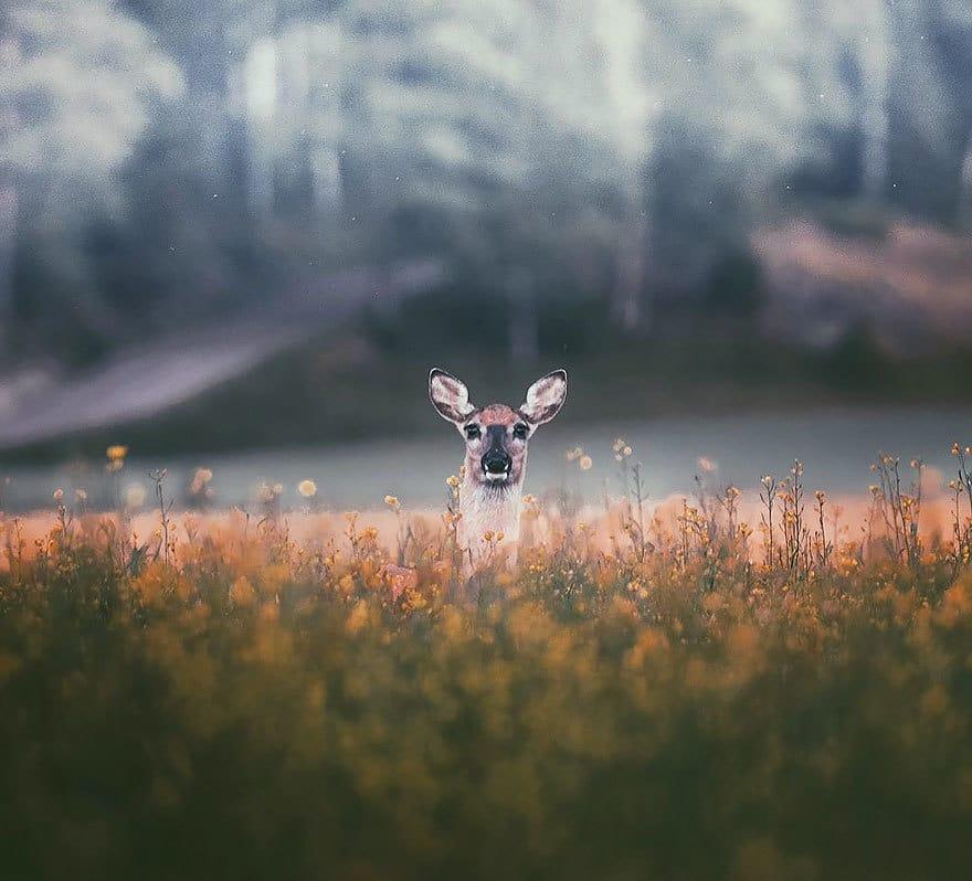 дикого животного-Photography-Konsta-punkka-11