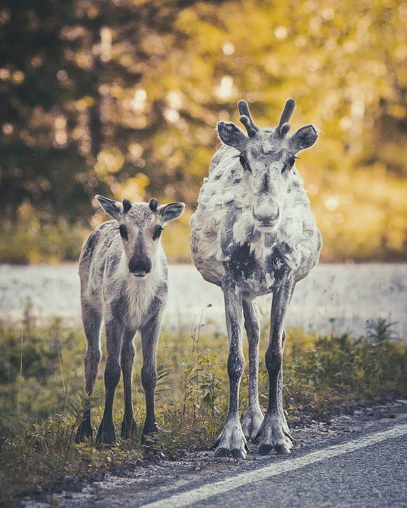 дикого животного-Photography-Konsta-punkka-13