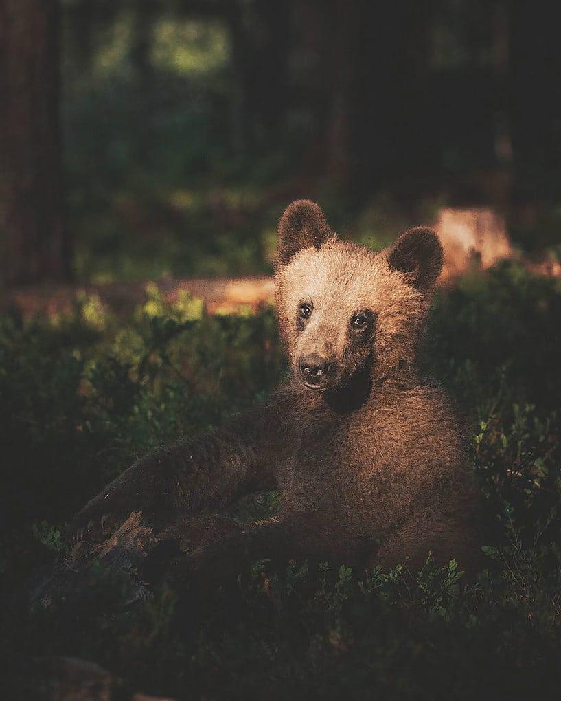 дикого животного-Photography-Konsta-punkka-14
