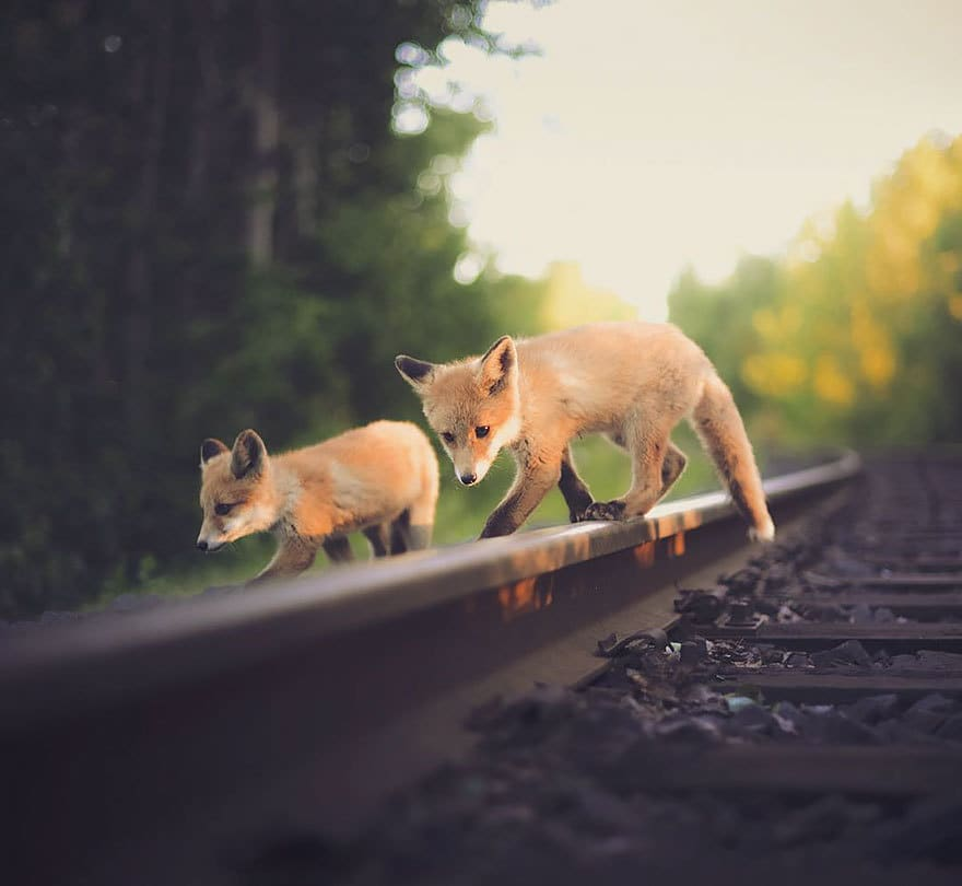 дикого животного-Photography-Konsta-punkka-20