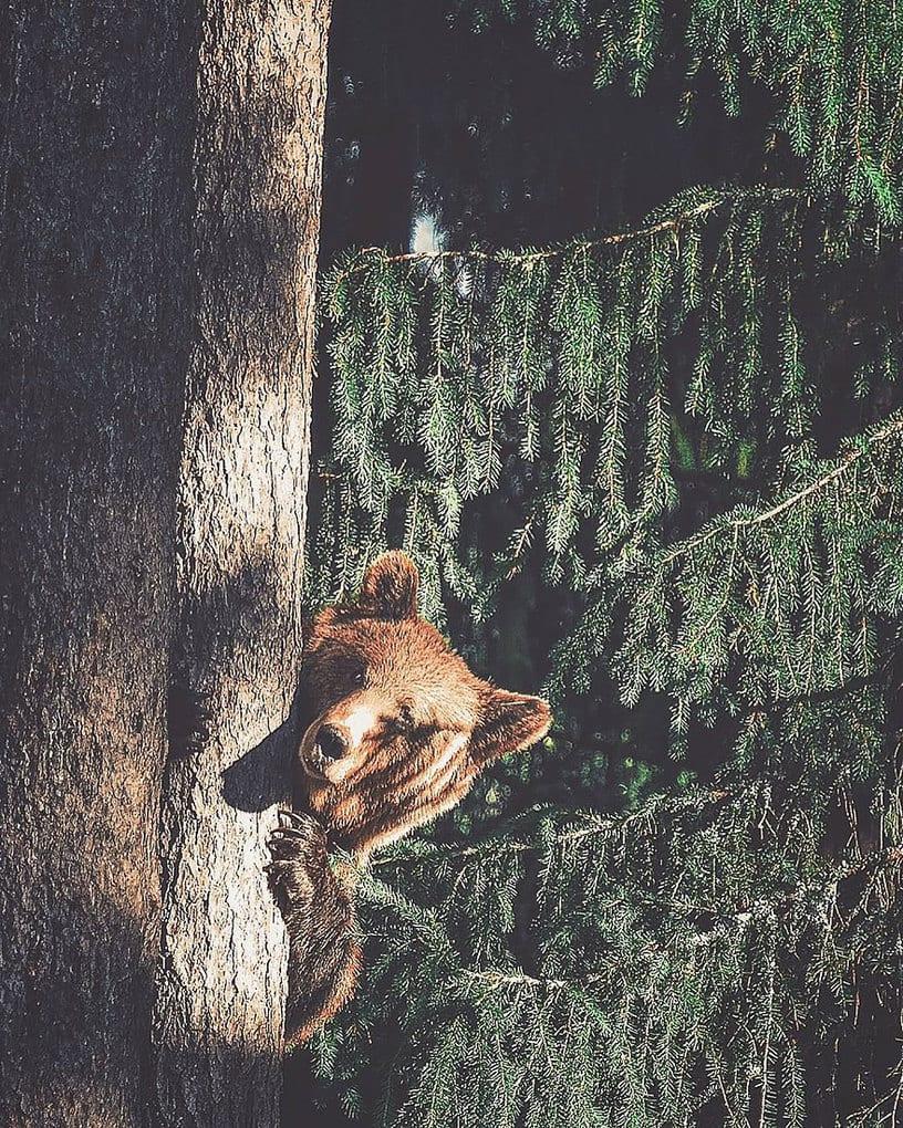 дикого животного-Photography-Konsta-punkka-7