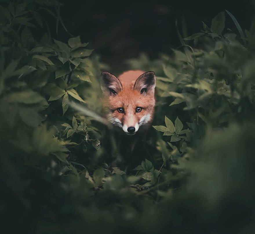 дикого животного-Photography-Konsta-punkka-8