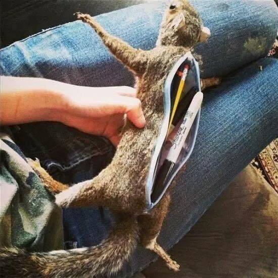 squirrel...pencil holder?