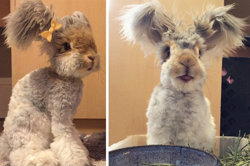 Знакомтесь — Валли, кролик с самыми большими ушами-крыльями