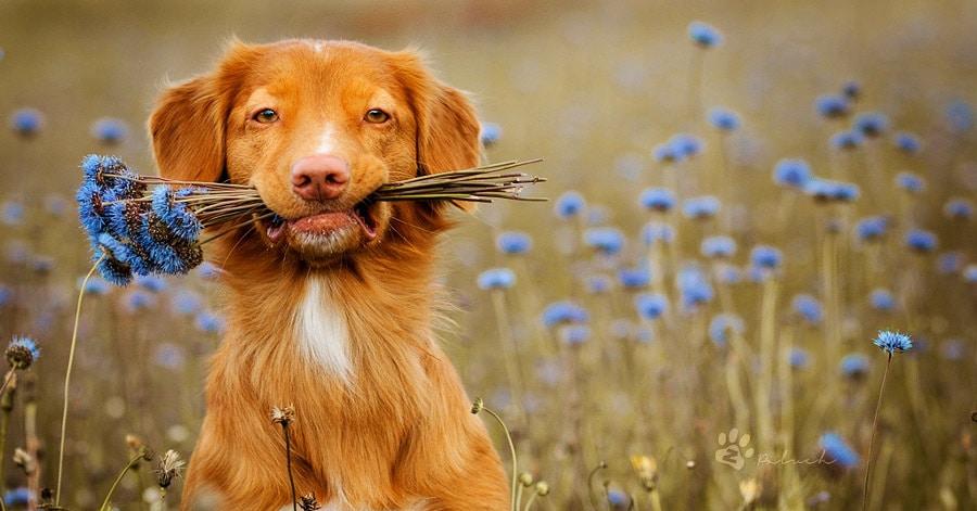 25 собак, которые поражают своей фотогеничностью