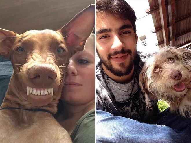dog-selfie12