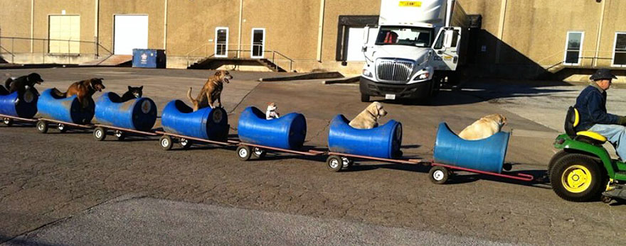 rescued-dog-train-tractor-stray-eugene-bostick-1